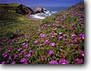 Stock photo. Caption: Ice plant or Hottentot fig Rodeo Cove Golden Gate National Recreation Area Marin County,  California -- landscape landscapes coast coasts west parks summer views scenic flowers flower spring coastline coastal headlands shore shoreline rugged sunny clear beaches beach secluded scenics seascapes seascape seashores sandy blooming bloom blue skies summer