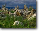 Stock photo. Caption: Cattails and tufa formations Lee Vining Tufa Area Mono Lake Tufa State Reserve Mono Basin National Forest Scenic Area Mono County,  California -- parks mountain united states america landscape landscapes tower towers  calm lakes mountains fresh bitter areas forests cinder cone cones unusual formations rock formation great basin sierras eastside eastern sierras reserves cloudy overcast stormy