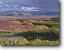 Stock photo. Caption: Approaching storm DeChambeau Wetlands Mono Basin National Forest Scenic    Area,  Great Basin,  California -- united states america landscape  landscapes lake wetland habitat stark environment areas sierras eastside marshy marsh range fall autumn