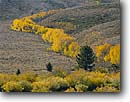 Stock photo. Caption: Aspens line Laurel Creek Sierra Nevada California -- aspen mountain mountains peak peaks range ranges fall color arid sagebrush country united states america landscape landscapes colors tree trees eastern sierras scenics scenic foliage linear lines creeks yellow sweet highcountry