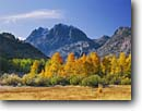 Stock photo. Caption: Aspens, willows and Carson Peak June Lake Loop Inyo National Forest Sierra Nevada, California -- Rush Creek aspen willow fall autumn color colors frost frosty morning mountain mountains snow eastern  tree trees united states america clear crisp cold sunny skies colour colours destination destinations scenic scenics