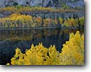 Stock photo. Caption: Aspens and Grant Lake, June Lake Loop Inyo National Forest Sierra Nevada Mono County,  California -- tree trees fall autumn color colors forests united states america mountains range ranges reflection reflections scenic drive drives sierras lakes destination destinations byways scenics lakes granite landscape landscapes