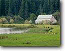 Stock photo. Caption: Farm in the Navarro River Valley Mendocino County California -- tree trees united states america ranches barns pasture pastures pastureland pasturelands pastoral ranch spring rural coastal redwoods redwood pond ponds farm farms farming agriculture building buildings barn northcoast landscape landscapes