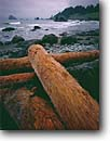 Stock photo. Caption: Driftwood on Hidden Beach Del Norte County coast Redwood National Park California -- united states america landscape landscapes coast coasts west pacific coastline coastlines shoreline shore shorelines parks rocky headlands headland rock cliffs rocky coastal seascape seascapes logs log pile trees tree beaches storm stormy clouds cloudy