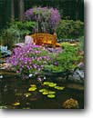 Stock photo. Caption: Private garden Trinidad Humboldt County California -- united states foot bridge bridges pond ponds flowers redwood forest flower bloom blooming formal pads float floating water gardens gardening landscaping backyard backyards redwoods northcoast north coast coastal feature features spring geraniums