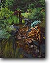 Stock photo. Caption: Private Garden Trinidad Humboldt County California -- united states pond ponds flowers redwood forest flower bloom blooming formal pads float floating water gardens gardening landscaping iris irises stream streambed phormium waterfall feature features grasses northcoast north coast coastal backyard backyards