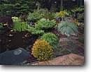 Stock photo. Caption: Private Garden Trinidad Humboldt County California -- pond ponds plants flowers redwood forest flower bloom blooming formal pads water gardens gardening landscaping iris irises juniper spruce walkway walkways tile slate backyard backyards northcoast north coast coastal bridges bridge footbridge spring