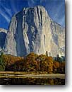 Stock photo. Caption: Merced River, black oaks & El Capitan Yosemite Valley Yosemite National Park Sierra Nevada,  California -- rivers granite dome domes fall autumn parks world heritage site sites mountains sunny clear america landscape sheer faces pristine travel tourist destination destinations oak climbing glacially carved valleys  spiritual massive face ethereal cosmic