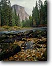 Stock photo. Caption: Merced River & El Capitan Yosemite Valley Yosemite National Park Sierra Nevada, California -- rivers granite dome domes leaves fall autumn parks world heritage site sites mountains united states america landscape landscapes pristine tourist attraction attractions solitude scenics scenic foliage leaves sweet quiet places trees landmarks landmark