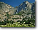 Stock photo. Caption: Cow Parsnip and Yosemite Falls Yosemite Valley Yosemite National Park Sierra Nevada,  California --   united states america tree trees waterfall waterfalls flowers wildflower wildflowers summer tourist travel vacation destination destinations attraction attractions parsnips Heracleum lanatum breathtaking wild dramatic spiritual