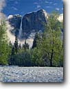 Stock photo. Caption: Black Cottonwoods and Upper   Yosemite Falls, Yosemite Valley Yosemite National Park Sierra Nevada,  California -- granite spring parks world heritage site sites mountains united states america landscape landscapes pristine travel tourist attraction attractions waterfall waterfalls glacially carved valleys snow snowfall clearing storms sunny clear skies meadows drama
