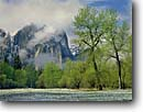 Stock photo. Caption: Black Cottonwoods and Cathedral Rocks Yosemite Valley Yosemite National Park Sierra Nevada,  California -- granite spring parks world heritage site sites mountains united states america landscape landscapes pristine travel tourist attraction attractions glacially carved valleys snow snowfall clearing storm clear sunny meadow meadows leafing scenic scenics