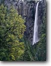 Stock photo. Caption: Bridalveil Falls and black oaks Yosemite Valley Yosemite National Park Sierra Nevada,  California -- creek creeks granite spring parks world heritage site sites mountains united states america landscape landscapes pristine travel tourist attraction attractions waterfall waterfalls glacially carved valleys clearing storms oaks sheer sierras fresh american