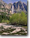 Stock photo. Caption: Upper Yosemite Falls Yosemite Valley Yosemite National Park Sierra Nevada, California -- cottonwood deciduous tree trees waterfall waterfalls spring valleys parks poplars icey snow cold freezing united states america world heritage site sites landscape landscapes tourist destination destinations travel river-ice breakup sunny clear break