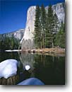 Stock photo. Caption: Merced River, ponderosa pines and   El Capitan,  Yosemite Valley Yosemite National Park Sierra Nevada,  California -- granite domes glaciated glacial  parks world heritage site sites landscape landscapes pristine tourist attraction attractions spiritual vacation destination destinations sierras icon icons famous nature natural rivers winter snow blue sunny clear skies