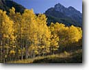 Stock photo. Caption: Aspens and Pyramid Peak Maroon Creek Canyon, Elk Mountains White River National Forest Rocky Mountains, Colorado -- united states america peaks tranquil forests majestic landscape landscapes divide mountain rockies subalpine alpine fourteener fourteeners wildernesses backcountry remote highcountry blue skies clear sunny scenic scenics fall autumn trees simple balance