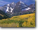 Stock photo. Caption: Aspens and Maroon Bells Maroon Creek Canyon White River National Forest Rocky Mountains,  Colorado -- aspen fall peak peaks autumn rockies snow capped landscape landscapes dramatic majestic mountain color colors forests fourteener fourteeners highcountry geology geologic spectacular breathtaking destination sunny blue skies clear dramatic soaring scenics