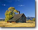 Stock photo. Caption: Old barn near Del Norte Rio Grande County Rio Grande River Valley Colorado -- landscape landscapes scenic scenics scene early barns building buildings sunny clear blue skies fall autumn wooden grasses pastoral rural heritage historic history settlers agriculture