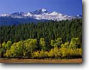Stock photo. Caption: Aspens & narrowleaf cottonwoods  and Longs Peak Rocky Mountain National Park Rocky Mountains, Colorado -- aspen cottonwood peaks parks fall autumn united america meadows meadow early snowfall snow landscape landscapes tourist attraction attractions forteener fourteeners rockies crisp clear pristine sunny blue skies scenic scenics destinations destination