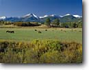 Stock photo. Caption: Sangre de Cristo Range   from Highway 69   north of Westcliffe Rocky Mountains, Colorado -- landscape landscapes scenic scenics scene country attraction attractions destination destinations rockies peaks summer travel tourist family vacation cows livestock cattle grazing grassland ranching ranch animals animal peak ranges sunny clear skies blue