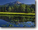 Stock photo. Caption: Yellow pond lily Engineer Mountain San Juan National Forest San Juan Mountains,  Colorado -- united states america reflection peak peaks tranquil forests reflections mountains calm majestic landscape landscapes divide rocky rockies ponds pond pondlilies summer meadow meadows landmark landmarks Nuphar lutea  polysepala sunny blue skies clear