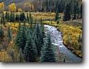 Stock photo. Caption: Colorado blue spruce and aspen South Fork San Miguel River San Juan Mountains Rocky Mountains,  Colorado -- united states america valley parks southern rockies creeks aspens spruces rockies water flowing fresh clean clear mountain fall autumn color free flowing pristine refreshing crisp trees tree rivers creek creeks winding