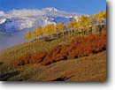 Stock photo. Caption: Aspens and Wilson Peak   from Deep Creek Mesa San Miguel Mountains Colorado -- aspen fall peak peaks autumn juan rocky oaks united states america peaks clouds snow capped snowy landscape landscapes dramatic majestic mountain juans scenic scenics sunny clear crisp colors colours color foliage dramatic vistas grand fresh yellow