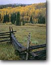 Stock photo. Caption: Fence, Aspens and blue spruce East Fork Dallas Creek Meadows Uncompahgre National Forest San Juan Mountains, Colorado -- rail fences fence aspens trees forest rural fall autumn snow capped peaks cold countryside country rocky mountain cattle ranch ranches rural rustic ranching fenceline fencelines winding grazing land pastureland fenced western west classic view views scene