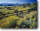 Stock photo. Caption: Rabbitbrush in Dallas Creek Valley and the Sneffels Range San Juan Mountains Rocky Mountains, Colorado -- united states america landscape landscapes scenic scenics scene distance view views vista vistas mountain forests meadow wildflowers wildflower fences fence clear sunny blue skies rural pastoral ranch ranchland ranches lands grazing fall autumn foliage