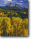 Stock photo. Caption: Aspens, Dunsinane and Precipice Peaks Owl Creek Pass Uncompahgre National Forest San Juan Mountains, Colorado -- Rocky Mountains aspens fall peak peaks autumn rockies united states america landscape landscapes dramatic majestic mountain color colors forests tree trees deciduous spruce spruces arete colour colours sunny clear blue skies scenics scenic snow foliage