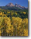 Stock photo. Caption: Aspens, Dunsinane and Precipice Peaks Owl Creek Pass, Uncompahgre National  Forest,  San Juan Mountains Rocky Mountains, Colorado -- aspens fall peak peaks autumn rockies united states america landscape landscapes dramatic majestic mountain color colors forests tree trees deciduous spruce spruces arete colour colours sunny clear blue skies scenics scenic snow foliage mixed