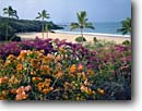 Stock photo. Caption: Bougainvillaea and Hapuna Beach Hapuna Beach State Park Island of Hawaii Hawaii -- islands tourist destination destinations tropical tropics pacific ocean oceans waves surf united states america tourist travel landscape landscapes swimming surfing surf break palm palms holiday vacation beaches sandy sand popular family hawaiian scenics