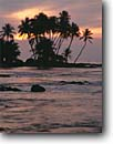Stock photo. Caption: Coconut palms at sunset Pauoa Bay South Kohala Coast Island of Hawaii,  Hawaii -- travel tourist destination destinations tropical historic island hawaiian islands united states america family vacation warm sunsets palm tree trees coastline ocean coastlines tropics landscape landscapes scenic winter ocean oceans coastal scenics scenic