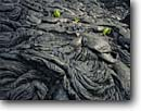 Stock photo. Caption: Pahoehoe lava and kupukupu  or common swordfern,  Holei Pali Hawaii Volcanoes National Park Island of Hawaii,  Hawaii -- flow flows flowing parks islands hawaiian tourist travel tropical destination destinations united states america world heritage site sites detail details common swordfern swordferns elastic wavy volcanic activity volcano winter ropey