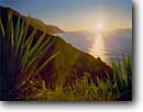 Stock photo. Caption: Agave at sunset Na Pali Coast Kalalau Trail Island of Kauai,  Hawaii -- tropical hiking destination destinations parks beaches beach  winter islands pacific ocean backpacking wilderness experience landscape landscapes sunsets headland headlands coastline hawaiian trust solitude quiet dramatic sunbeams sunbeam coastlines scene