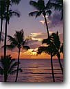 Stock photo. Caption: Coconut palms at sunset Makena Island of Maui Hawaii -- united states america tropical silhouette silhouettes hawaiian tourist destination travel destinations palm trees tree ocean shoreline classic sunsets landscape landscapes horizon scenic scenics oceans romantic vacation tropics vacations