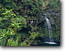 Stock photo. Caption: Puaakaa State Wayside Hana Highway Island of Maui Hawaii -- hawaiian islands trees winter tropical destination destinations travel tourist vista vistas trees secluded shoreline paradise scenic scenics waterfall waterfalls rest stop rainforest rainforests native plants tropics basalt lava