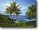 Stock photo. Caption: Coconut palms and hala Pailoa Bay and Pukaulua Point Waianapanapa State Park Island of Maui,  Hawaii -- tropical destination destinations parks beaches halas united states america winter islands pacific ocean tourist travel landscape landscapes attraction attractions tree trees native hawaiian vegetation flora sunny blue skies clear scenics scenic
