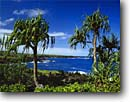 Stock photo. Caption: Hala trees and naupaka-kahakai Pailoa Bay and Pukaulua Point Waianapanapa State Park Island of Maui, Hawaii -- tropical destination destinations united states america tourist travel landscape landscapes attraction attractions hawaiian paradise parks beaches beach black sand camping native tree vegetation plants plant flora blue skies sunny clear parks scenics