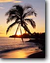 Stock photo. Caption: Coconut palm and Hekili Point Island of Maui Hawaii -- palms relax relaxation islands tropical sunrises light destination destinations sunbeams sunbeam vacation vacations tourist travel leisure time landscape landscapes hawaiian beach beaches sandy peace hope warm warmth holiday scenics paradise sunny scenics
