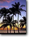 Stock photo. Caption: Coconut palms at sunrise West Maui Island Of Maui Hawaii -- palms relax relaxation islands tropical sunrises light destination destinations vacation vacations tourist travel leisure time landscape landscapes hawaiian beach beaches sandy peace hope warm warmth holiday scenics paradise sunny scenics scenic blue