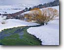 Stock photo. Caption: Willows line spring fed creek   in winter Mound Valley near Bear River Idaho -- united states america snow landscape landscapes wintery frigid cold freezing winter tracks springs creeks stream streams brook brooks frozen