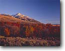 Stock photo. Caption: Autumn Diamond Mountain Challis National Forest Rocky Mountains, Idaho -- united states america landscape landscapes mountain rockies forests fall foliage color peak mountains sunny blue sky clear snow covered peak peaks