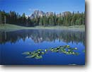 Stock photo. Caption: Yellow pond lily Little Frog Lake & Castle Peak White Cloud Peaks Sawtooth National Recreation Area Challis National Forest, Idaho -- Keywords: united states america reflection peak peaks tranquil forests reflections mountains calm majestic landscape landscapes mountain rocky rockies  ponds subalpine summer areas lakes lilies nuphar luteum wildflower wildflowers Spatterdock