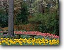 Stock photo. Caption: Main Garden Hodges Gardens Many Louisiana -- formal public flowers flower summer walkways manicured landscaping gardening bench benches tulip dogwood spring leisure calm serene rest attractions flower blooming beautiful spectacular color sweet tulips flowering landscaped attraction gardens south