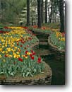 Stock photo. Caption: Main Garden Hodges Gardens State Park Florien Louisiana -- formal public flowers tulips flower spring manicured landscaping gardening landscape landscapes tulip dogwood spring serene rest cultivated luxurious travel excellence lined stream creek beautiful color colors sweet water features feature attractions
