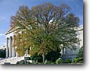 Stock photo. Caption: White oak  in early autumn National Gallery of Art National Mall Washington D. C,  USA -- americana nostalgic nostalgia united states america historic historical building buildings cityscape cityscapes government power politics courts column columns justice district columbia