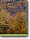 Stock photo. Caption: Northern hardwood forest Kenneth Dubuque Memorial State Forest Franklin County Massachusetts, New England -- tree trees united states america forest forests landscapes landscape  north woods fall autumn northeast northeastern