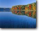 Stock photo. Caption: Red and sugar maples Guernsey Lake Pere Marquette State Forest Kalkaska County,  Michigan -- maples tree trees tranquil calm calming lakes forests lower peninsula reflection reflections hardwood hardwoods northern upper midwest great lakes fall autumn landscape landscapes color colors brilliant time sunny clear blue skies perfect placid interlude