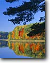 Stock photo. Caption: Eastern white pine Guernsey Lake Pere Marquette State Forest Kalkaska County,  Michigan -- maples tree trees tranquil calm calming lakes forests lower peninsula reflection reflections hardwood hardwoods northern upper midwest great lakes fall autumn landscape landscapes color colors brilliant balance perfect time pure sunny blue skies lakeshore